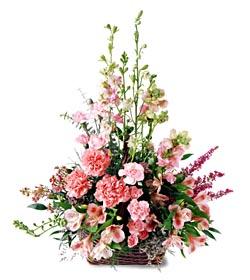 Gaziantep kaliteli taze ve ucuz çiçekler  mevsim çiçeklerinden özel