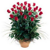 Gaziantep çiçek , çiçekçi , çiçekçilik  10 adet kirmizi gül cam yada mika vazo