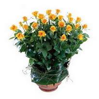 Gaziantep çiçek satışı  10 adet sari gül tanzim cam yada mika vazoda çiçek