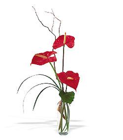 Gaziantep online çiçekçi , çiçek siparişi  cam yada mika Vazoda 3 adet  antoryum
