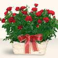 Gaziantep uluslararası çiçek gönderme  11 adet kirmizi gül sepette