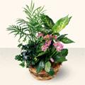 Gaziantep çiçek servisi , çiçekçi adresleri  5 adet canli çiçek sepette