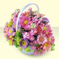 Gaziantep online çiçek gönderme sipariş  bir sepet dolusu kir çiçegi  Gaziantep 14 şubat sevgililer günü çiçek