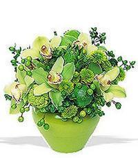 cam yada mika vazoda 5 adet orkide   Gaziantep cicek , cicekci
