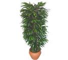 Gaziantep online çiçekçi , çiçek siparişi  Özel Mango 1,75 cm yüksekliginde