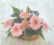 gerbera çiçeklerinde sepet   Gaziantep anneler günü çiçek yolla