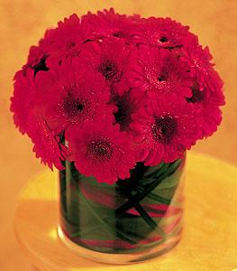 Gaziantep kaliteli taze ve ucuz çiçekler  23 adet gerbera çiçegi sade ve sik cam içerisinde