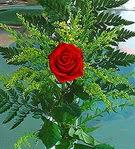 1 adet kirmizi gül buketi   Gaziantep çiçek yolla