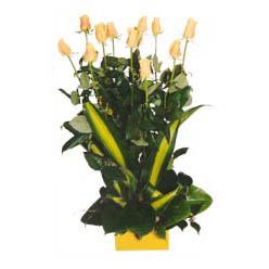 12 adet beyaz gül aranjmani  Gaziantep internetten çiçek siparişi