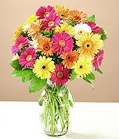 Gaziantep çiçek siparişi sitesi  17 adet karisik gerbera