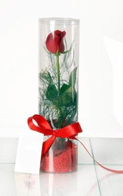 Gaziantep anneler günü çiçek yolla  Silindir vazoda tek kirmizi gül