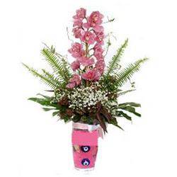 Gaziantep güvenli kaliteli hızlı çiçek  cam yada mika vazo içerisinde tek dal orkide çiçegi