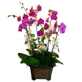 Gaziantep çiçekçi telefonları  4 adet orkide çiçegi