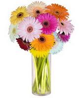 Gaziantep çiçek gönderme sitemiz güvenlidir  Farkli renklerde 15 adet gerbera çiçegi