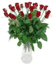 Gaziantep çiçek online çiçek siparişi  11 adet kimizi gülün ihtisami cam yada mika vazo modeli
