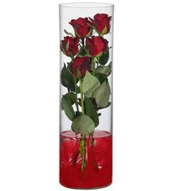 cam içerisinde 7 adet kirmizi gül  Gaziantep İnternetten çiçek siparişi