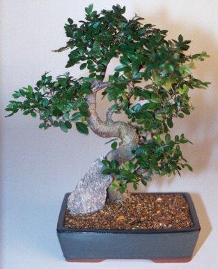 Gaziantep 14 şubat sevgililer günü çiçek  ithal bonsai saksi çiçegi  Gaziantep online çiçekçi , çiçek siparişi
