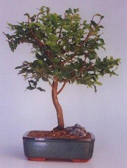 Gaziantep kaliteli taze ve ucuz çiçekler  ithal bonsai saksi çiçegi  Gaziantep hediye çiçek yolla