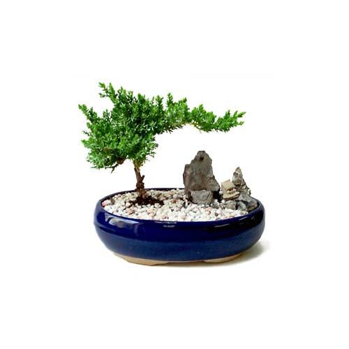 ithal bonsai saksi çiçegi  Gaziantep hediye sevgilime hediye çiçek