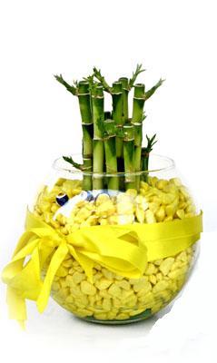 cam fanus içerisinde bambo  Gaziantep çiçek yolla , çiçek gönder , çiçekçi