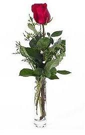 Vazo içerisinde 1 adet kirmizi gül  Gaziantep çiçek satışı