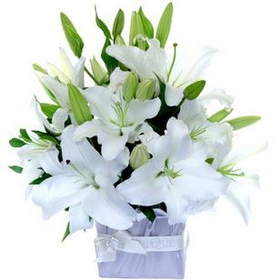Gaziantep anneler günü çiçek yolla  2 dal cazablanca vazo çiçeği
