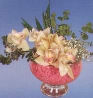 Gaziantep çiçekçiler  Dal orkide kalite bir hediye
