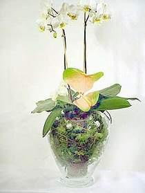 Gaziantep çiçek servisi , çiçekçi adresleri  Cam yada mika vazoda özel orkideler