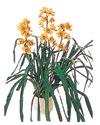 Gaziantep İnternetten çiçek siparişi  Orchiede ithal büyük boy saksi