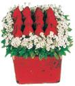 Gaziantep hediye sevgilime hediye çiçek  Kare cam yada mika içinde kirmizi güller - anneler günü seçimi özel çiçek