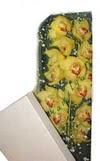 Gaziantep hediye sevgilime hediye çiçek  Kutu içerisine dal cymbidium orkide