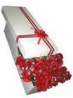 Gaziantep çiçek online çiçek siparişi  11 adet 1.kalite magnum güller