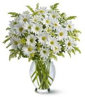 Vazo içerisinde beyaz krizantem çiçekleri  Gaziantep yurtiçi ve yurtdışı çiçek siparişi