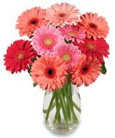 vazo içerisinde 13 adet gerbera çiçeği  Gaziantep online çiçekçi , çiçek siparişi