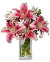 Vazo içerisinde 5 dal kazablanka çiçeği  Gaziantep çiçek satışı
