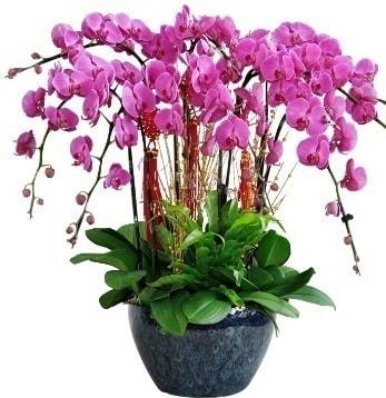 9 dallı mor orkide  Gaziantep ucuz çiçek gönder