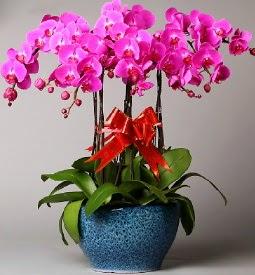 7 dallı mor orkide  Gaziantep çiçek siparişi sitesi