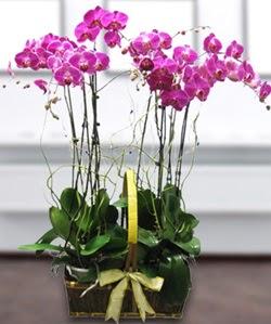 4 dallı mor orkide  Gaziantep çiçek siparişi vermek