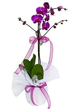 Tek dallı mor orkide  Gaziantep çiçek online çiçek siparişi