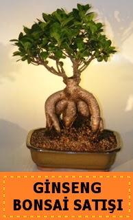 Ginseng bonsai satışı japon ağacı  Gaziantep çiçekçi telefonları