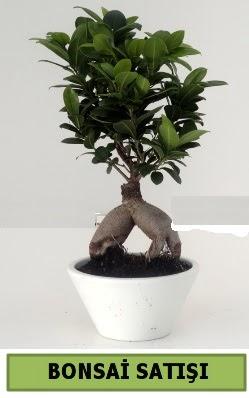 Bonsai japon ağacı satışı  Gaziantep internetten çiçek satışı