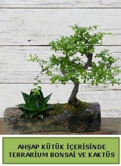 Ahşap kütük bonsai kaktüs teraryum  Gaziantep çiçek gönderme sitemiz güvenlidir