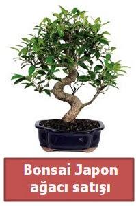 Japon ağacı bonsai satışı  Gaziantep online çiçekçi , çiçek siparişi