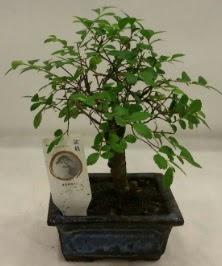Minyatür ithal japon ağacı bonsai bitkisi  Gaziantep çiçek servisi , çiçekçi adresleri