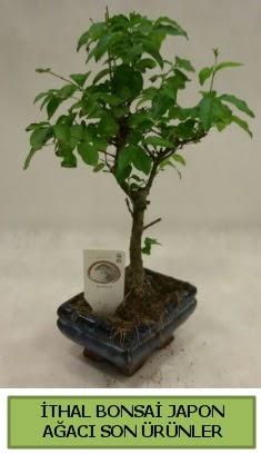 İthal bonsai japon ağacı bitkisi  Gaziantep çiçekçi mağazası