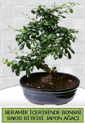Seramik vazoda bonsai japon ağacı bitkisi  Gaziantep online çiçekçi , çiçek siparişi