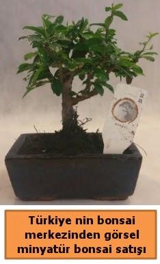 Japon ağacı bonsai satışı ithal görsel  Gaziantep anneler günü çiçek yolla