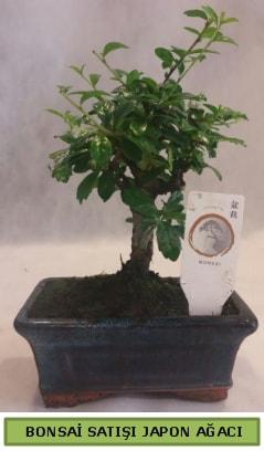 Minyatür bonsai ağacı satışı  Gaziantep hediye sevgilime hediye çiçek