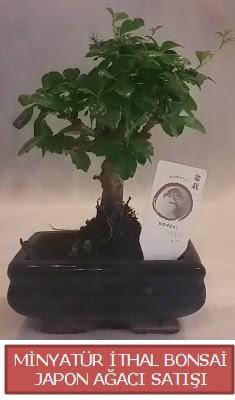 Küçük görsel bonsai japon ağacı bitkisi  Gaziantep çiçek mağazası , çiçekçi adresleri