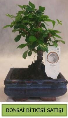 Bonsai ithal görsel minyatür japon ağacı  Gaziantep kaliteli taze ve ucuz çiçekler